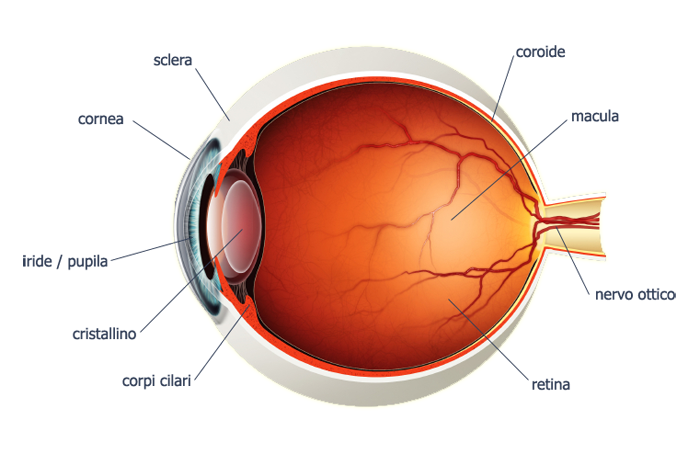Anatomia-Occhio