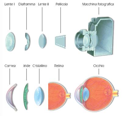 Anatomia Occhio come funziona